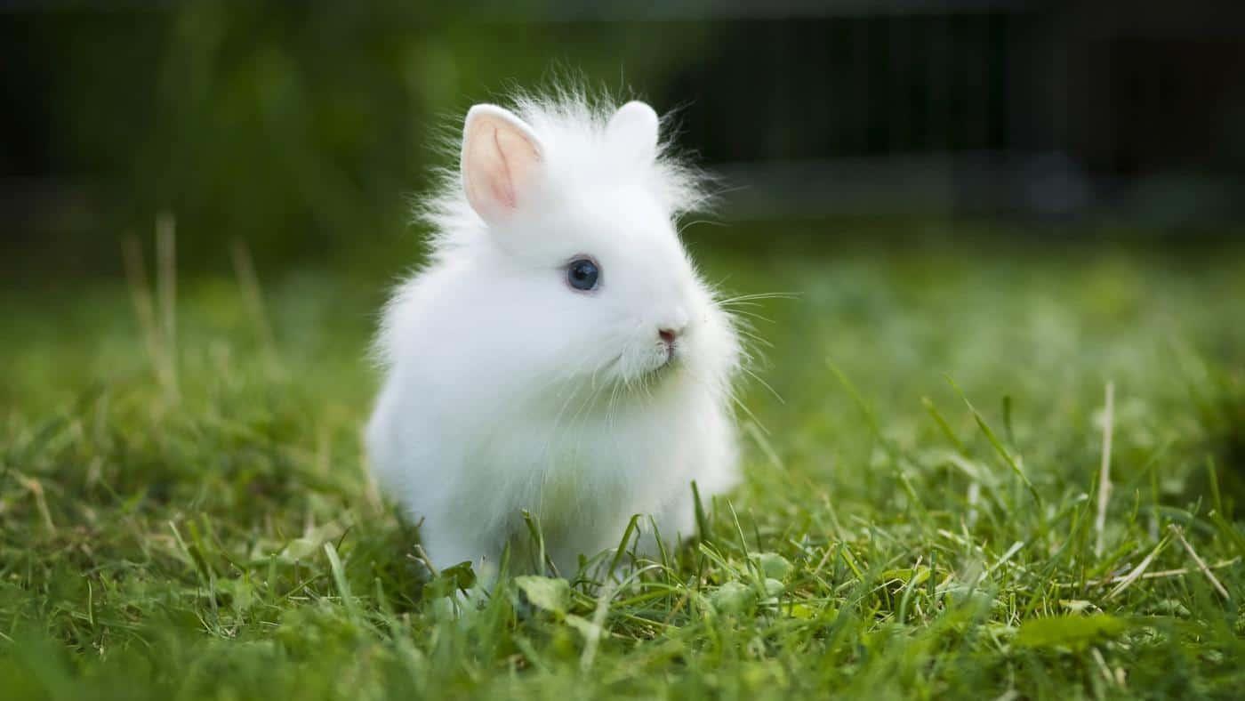Tavşanların Aslında Dünyanın En Tatlı Canlıları Olması