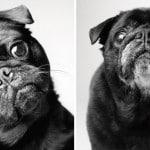 Köpekler Nasıl Yaşlanır: Büyüleyici ve Duygusal Bir Fotoğraf Projesi