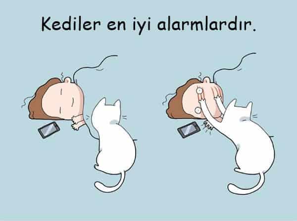 cat1-