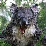 Lanetli Kıta Avustralya'dan Tüyler Ürperten Görüntüler