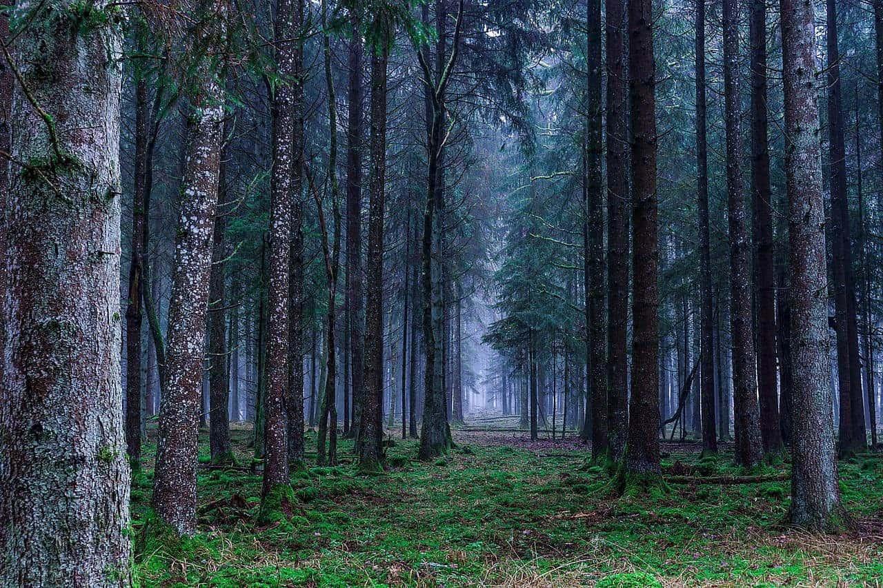 Dünyaya Ne Kadar Ağaç Dikebiliriz?