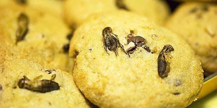 arılı kurabiye