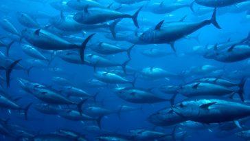 Denizlerde Balık Sayısı Neden Azalıyor?