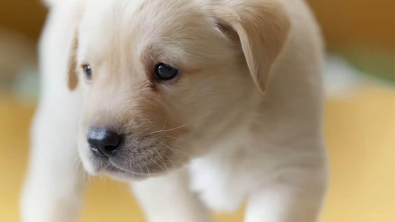 Köpekler Güler Mi?