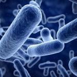 Araştırma: Çölyak Hastalığı Bakteriden Dolayı Oluyor Olabilir