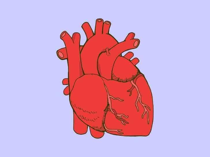 Normal Kalp Atış Hızı Nedir?