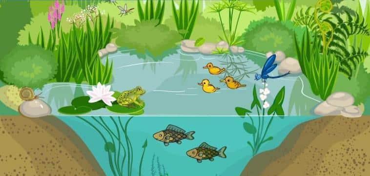 Ekosistem Nedir?