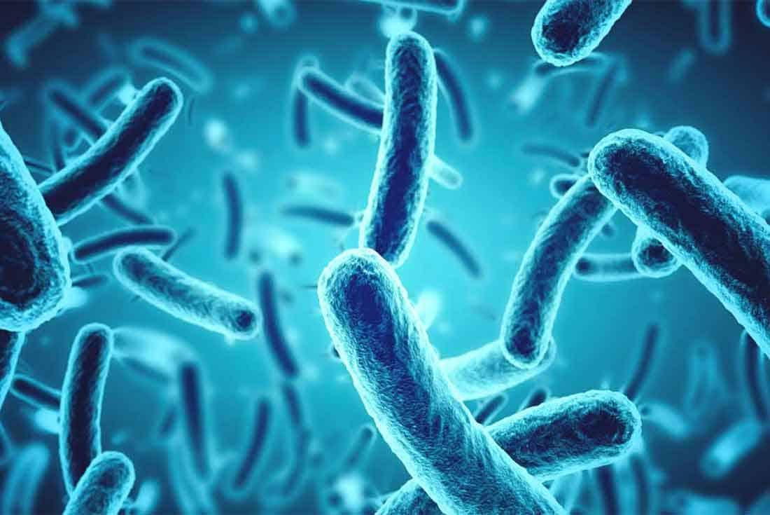 Bakteriler Ve Virüsler Arasındaki Fark Nedir?