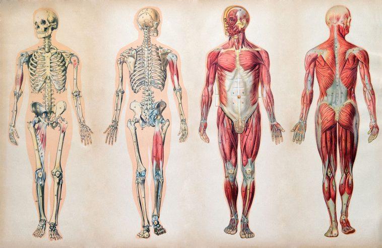 Doğduktan Ölüme Kadar İnsan Vücudunda Neler Oluyor?