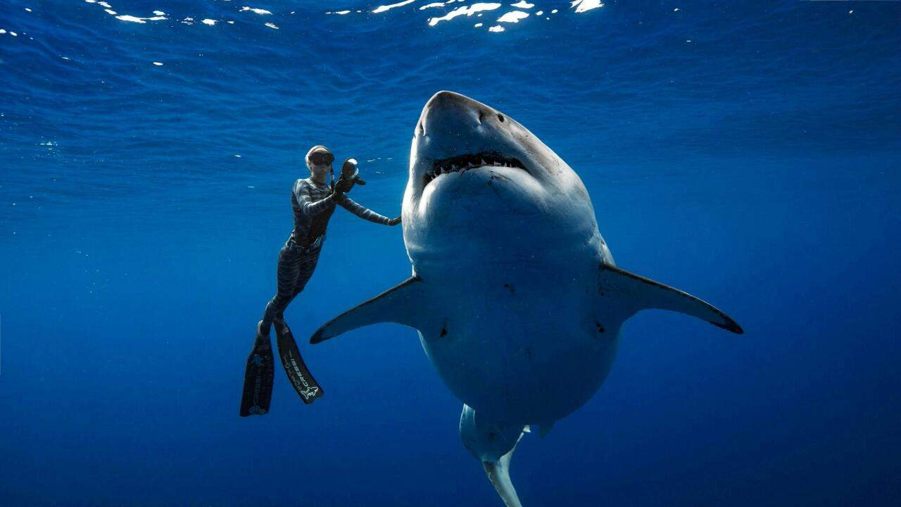 Köpekbalığı Saldırısından Nasıl Kurtulunur?