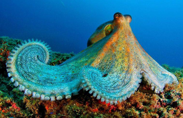 Bazı Okyanus Canlıları Virüsleri Etkisiz Hale Getirebiliyor