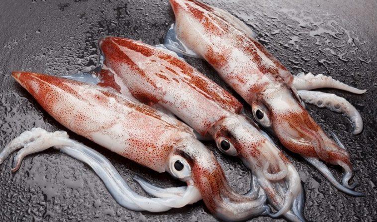 Mürekkep Balığı Sizden Akıllı Olabilir!