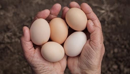 1 Saatte 50 Yumurta Yerseniz Ne Olur?