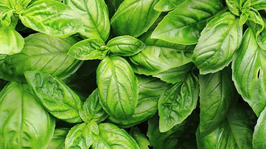 Çoğu İnsan Bu Yeşil Sebzelerin Adını Bilemiyor