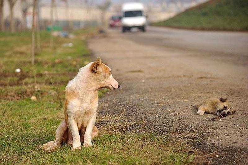Hayvan İşkenceleri Hakkında Tüyler Ürpertici Gerçekler