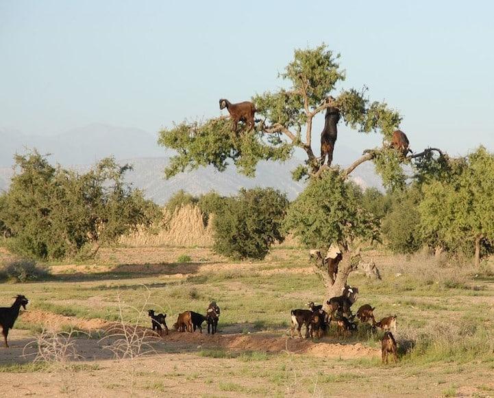 Ağaca Tırmanabilen Hayvanlar