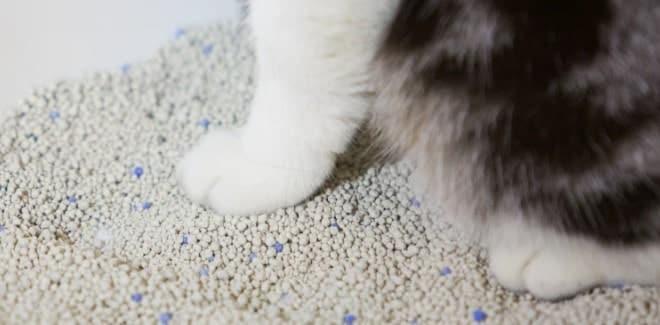 En İyi Kedi Kumu – 2021 Güncel – Kedinizi Mutlu Edecek 11 Kum Önerisi