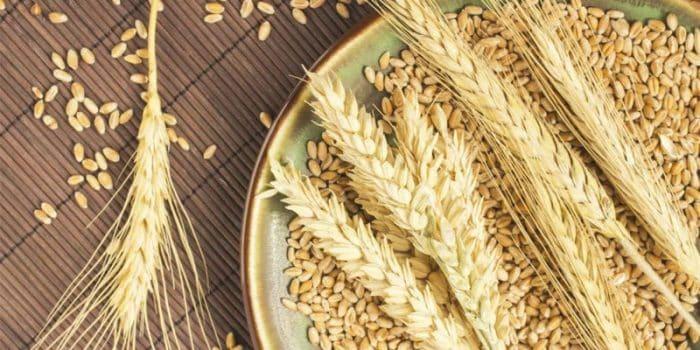 Durum Buğdayı Nelerde Kullanılır?