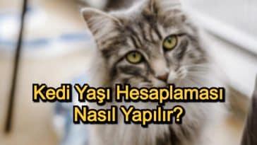 Kedi Yaşı Hesaplaması Nasıl Yapılır?