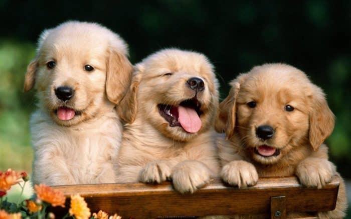 Dişi Köpek İsimleri Nelerdir? – Mitolojilerde Köpek İsimleri