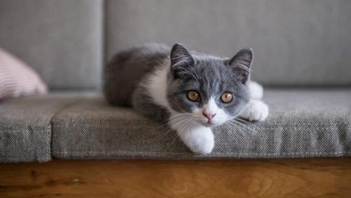Erkek Kedi İsimleri Nelerdir? – Popüler ve Anlamlı Erkek Kedi İsimleri