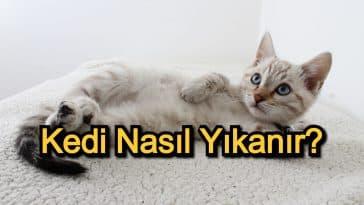 Kedi Nasıl Yıkanır? – Kediye Banyo Yaptırma Yolları ve Dikkat Edilecekler