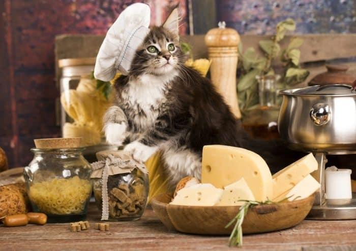 Kediler Peynir Yer Mi? – Kediler İçin Sakıncalı Yiyecekler