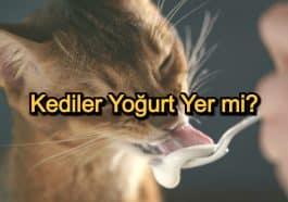 Kediler Yoğurt Yer Mi? – Kedi Beslenmesi ve Yedirilecek Besinler