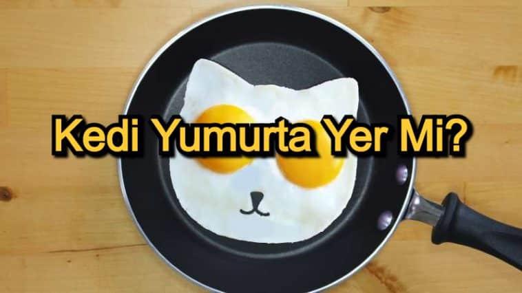 Kedi Yumurta Yer Mi? – Kediler İçin Zararlı Yiyecekler