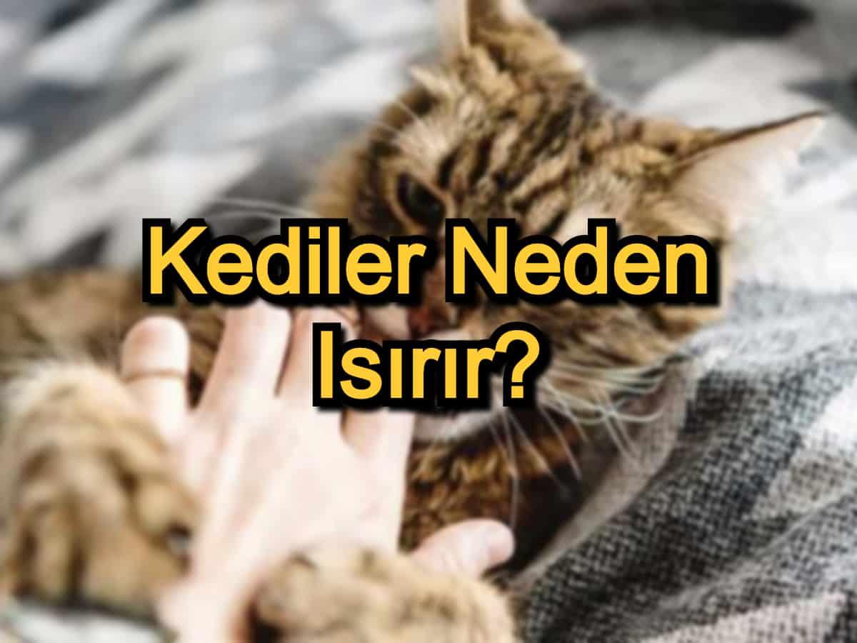 Kediler Neden Isırır? – Kedilerin Isırma Nedenleri ve Çözümleri