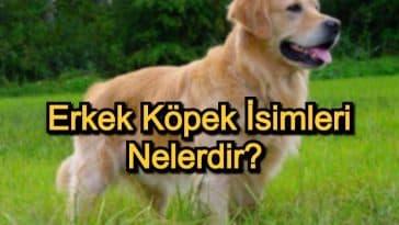 Erkek Köpek İsimleri Nelerdir? – Popüler ve Anlamlı Erkek Köpek İsimleri