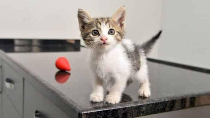 Yavru Kediler Ne Yerler? – Yavru Kedi Beslenmesi Dikkat Edilecekler