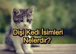 Dişi Kedi İsimleri Nelerdir? – Mitolojilerde Kedi İsimleri