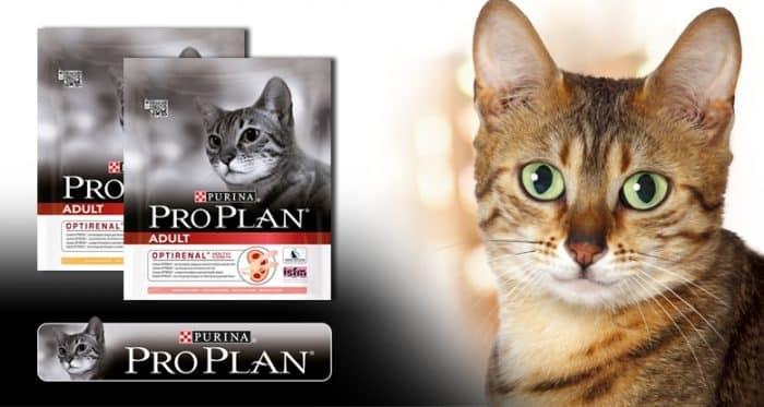proplan cat food
