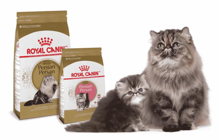 royal canin cat food